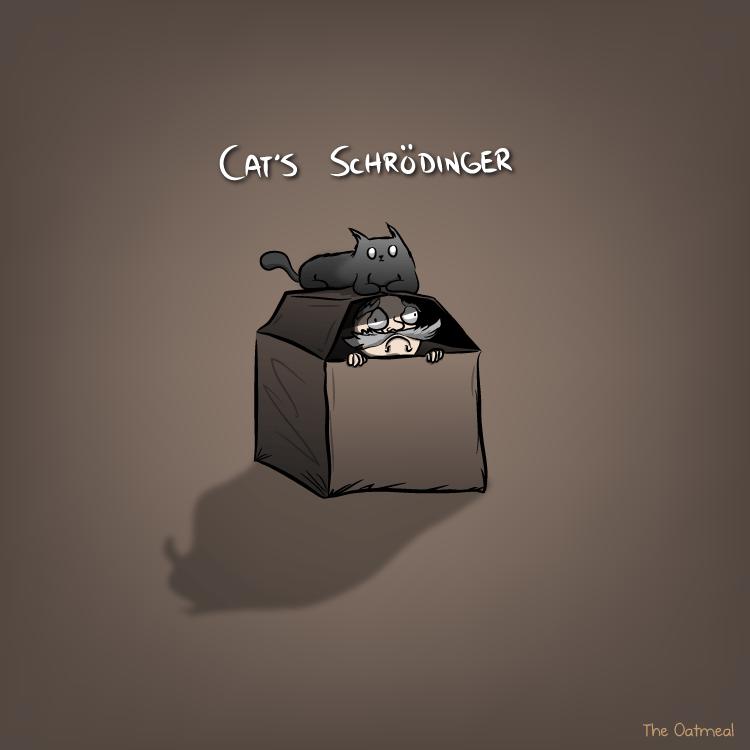 cat s schrödinger the