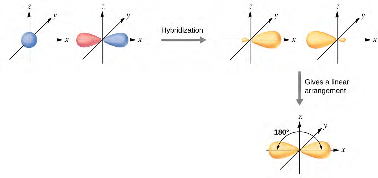 hight resolution of hybridization of an s orbital blue and a p orbital red of the same atom produces two sp hybrid orbitals purple each hybrid orbital is oriented