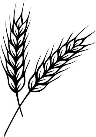 of wheat Colouring Pages