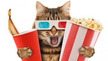 películas de gatos