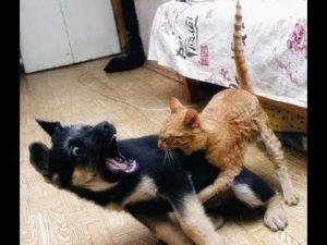porque se odian perros y gatos