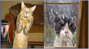 los gatos mascotas más dramáticas