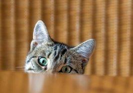 Que piensan los gatos de nosotros