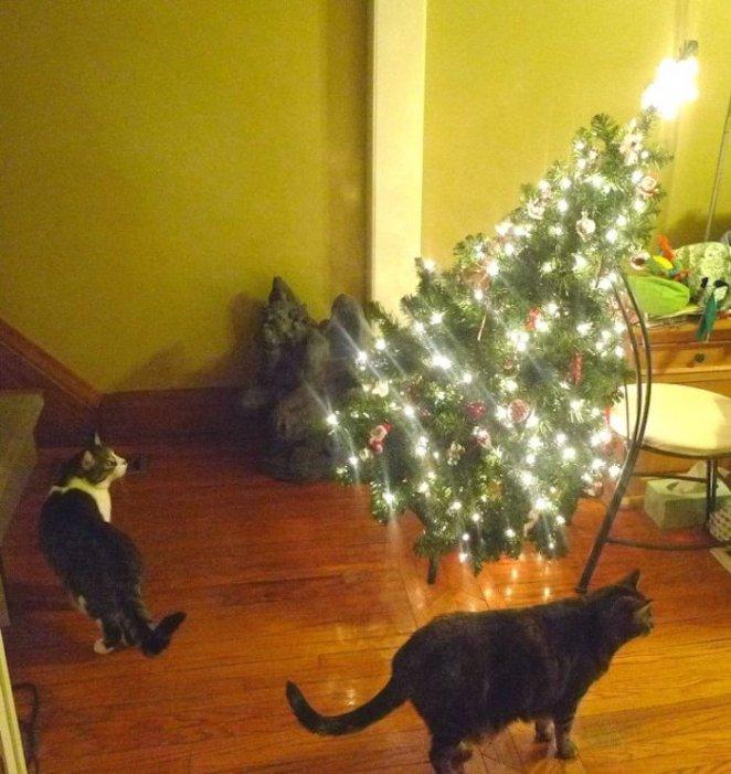 travesuras de gatos en navidad - gatos destrozando árbol de navidad