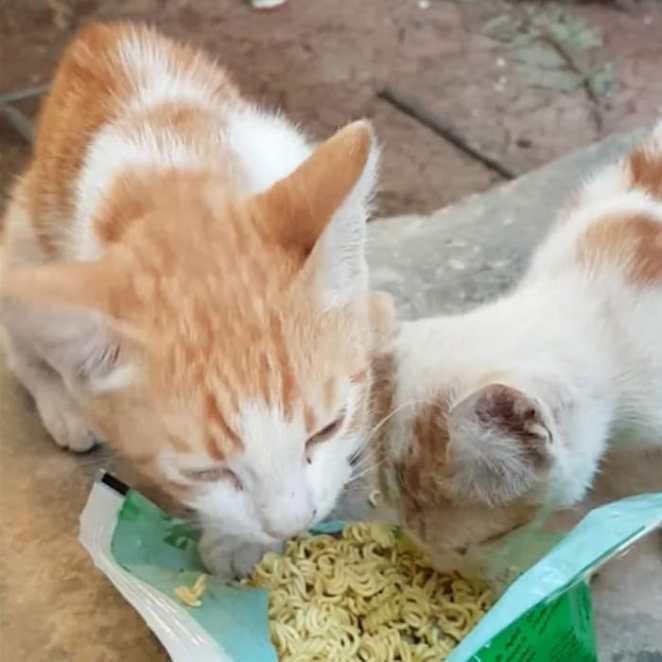ciudad de kafr nabl la ciudad de los gatos