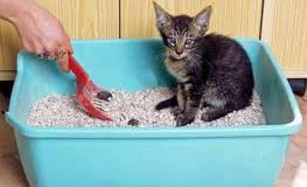 eliminar el olor de orina de gato y haga popo en su caja de arena