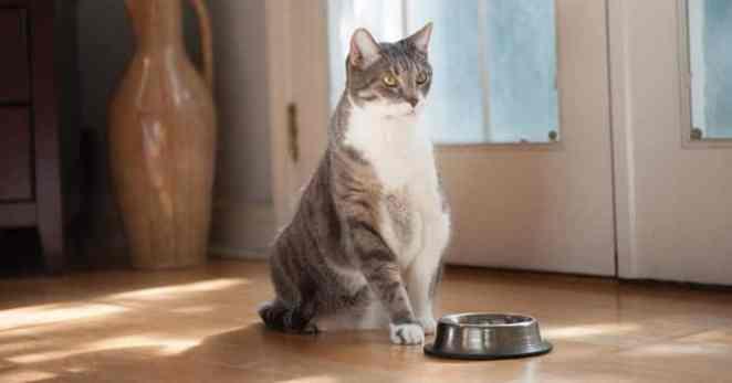 las mejores vitaminas para gatos