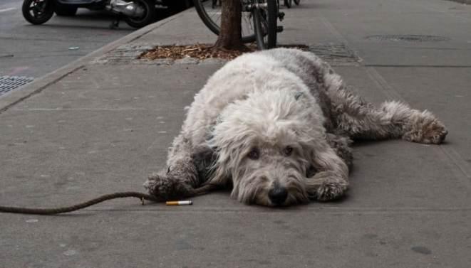 humo de cigarro en mascotas