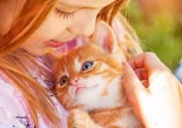 gatos como terapias para el autismo
