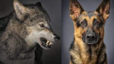historia del perro