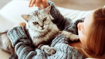 Un reciente estudio, afirma que los gatos podrían acercarnos a un parásito llamado Toxoplasma Gondii, que te produce diferentes enfermedades y que se ha asociado a trastornos mentales
