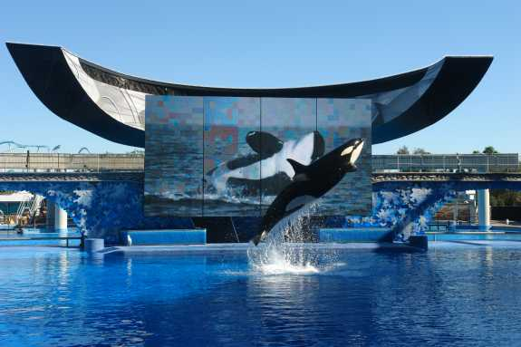 Seaworld Raises Single Day Tickets Drops Weekday Ticket Prices
