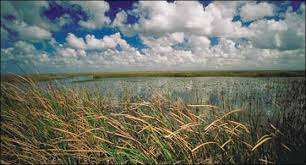 The Everglades. Photo: National Parks Service