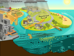 Graphic courtesy the World Resources Institute
