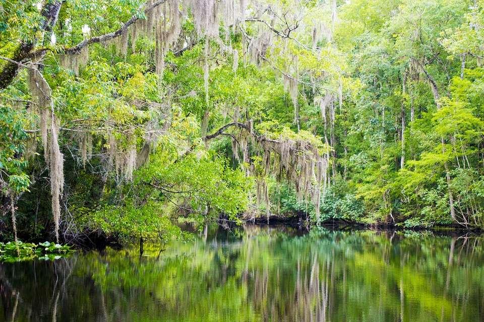 Natural Florida landscape image courtesy of Creative Commons Zero (CC0)