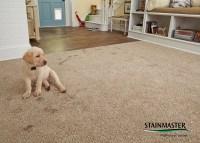 Pet Protect Carpet - Carpet Vidalondon