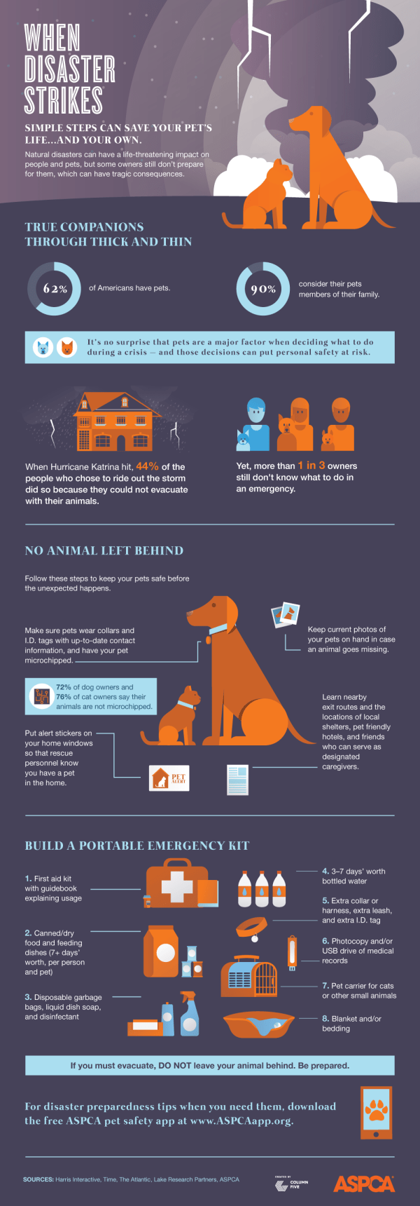 Pet Hurricane Preparedness Infographic