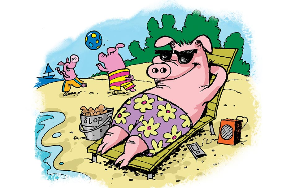 Pigs On Vacation Highlights Kids