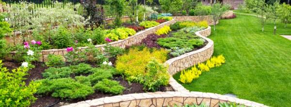 landscaping 101 beginner's