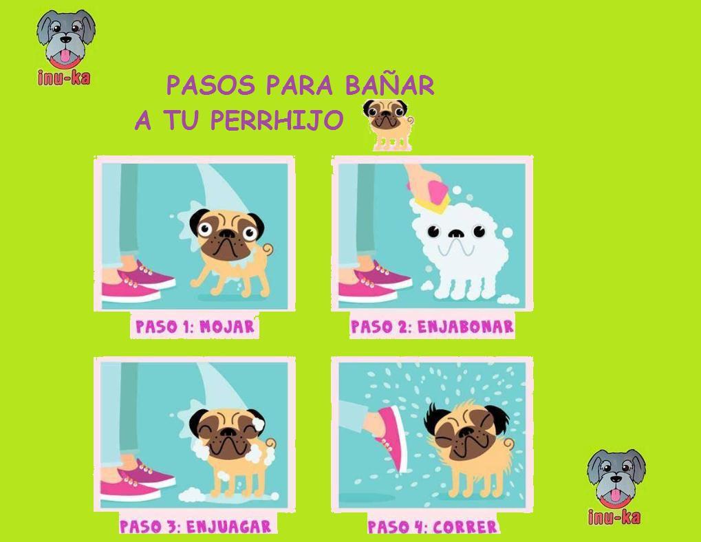Bao para Perros en Coatzacoalcos Veracruz inukamx  Mercadomx