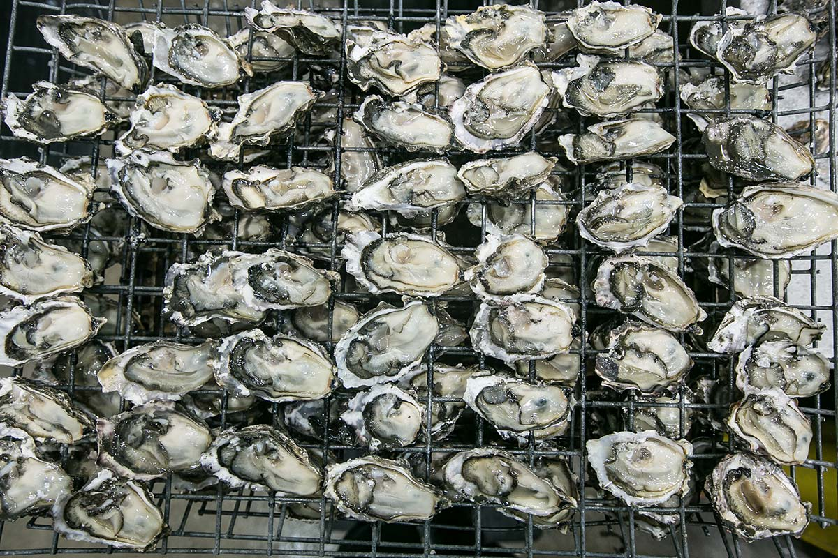 With millions of dollars in revenue at stake in its oyster business, the Taylors vow to fight for the future.