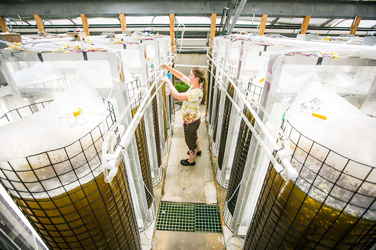 Nicole Hamlin monitors bags of algae being raised to feed oysters in Taylor Shellfish's hatchery in Quilcene, Washington.