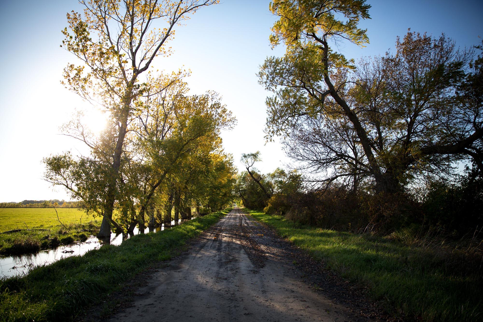 A shelterbelt on Highway 13, south of Plainview, Nebraska.