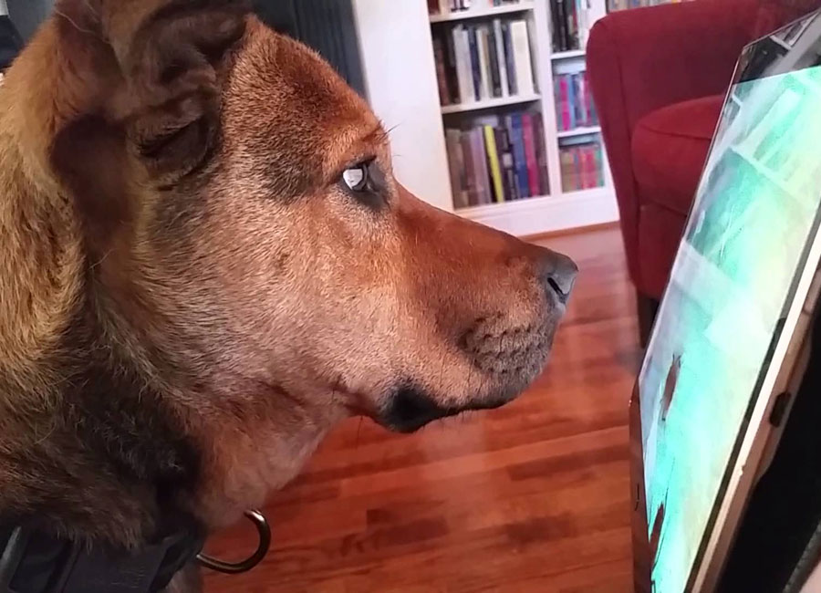 Image result for Helping your dog learn something new
