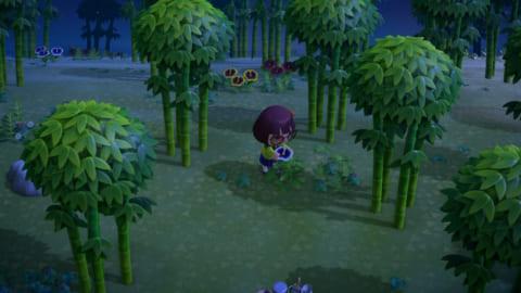 島 擬似 タランチュラ