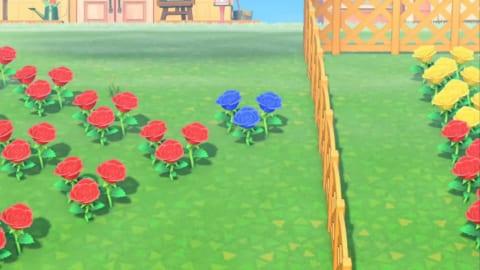 あつ 青い 森 バラ