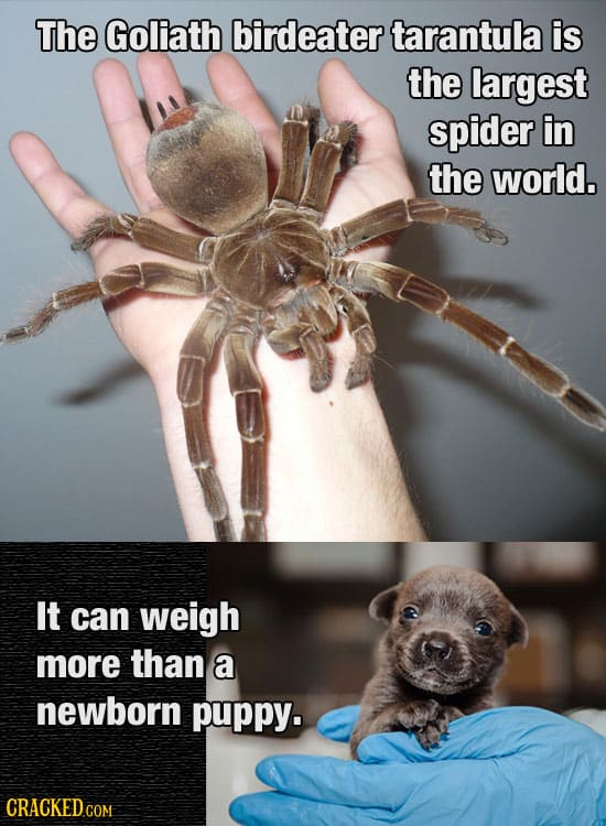 28 Things That Are Way Bigger (Or Smaller) Than You Thought