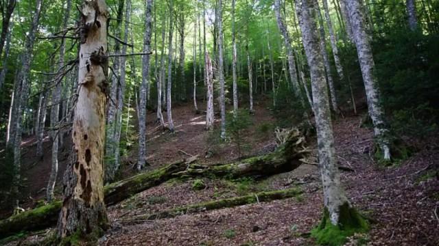 Reserva Integra de Aztaparreta.