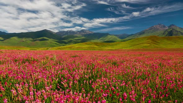 field with flowers in mountain