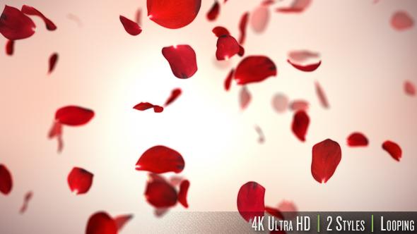 falling red rose petals