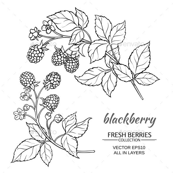 Blackberry Q10 Vector » Dondrup.com
