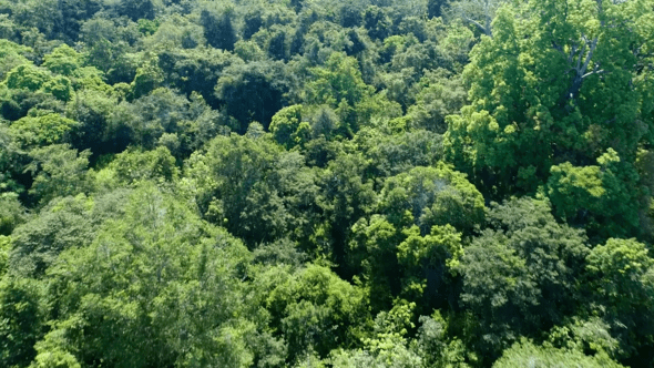 flyover jungle forest trees
