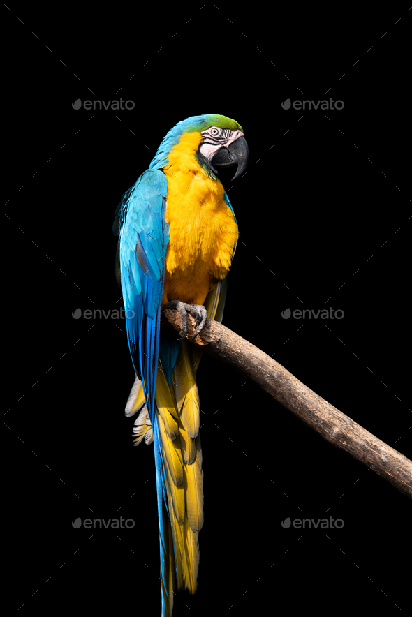 parrot bird severe macaw