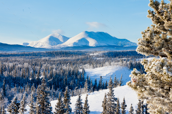 taiga winter snow landscape