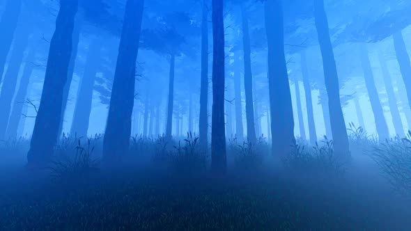 night forest in the
