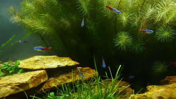 fish and marine plants
