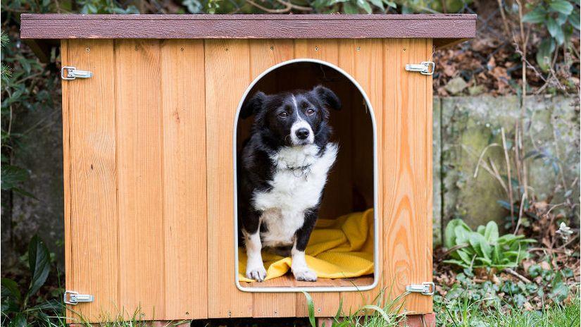 Cuscini per cani grandi comfort XXL per la cuccia