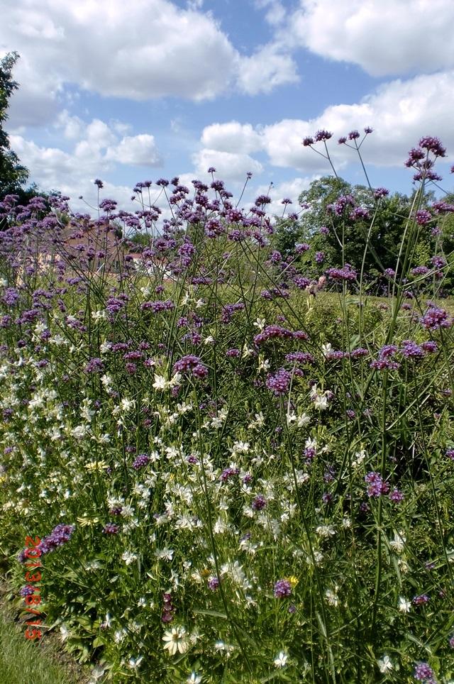 Wildblumen Im Garten Latest Wildblumen Garten Blumenwiese