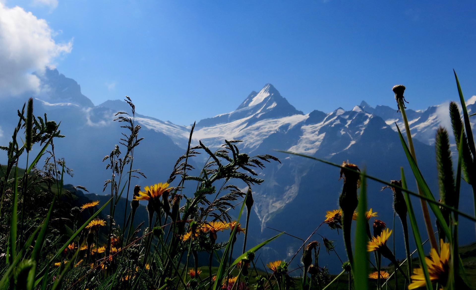 Viajes Alventus  Oberland Berns Senderos de los Alpes