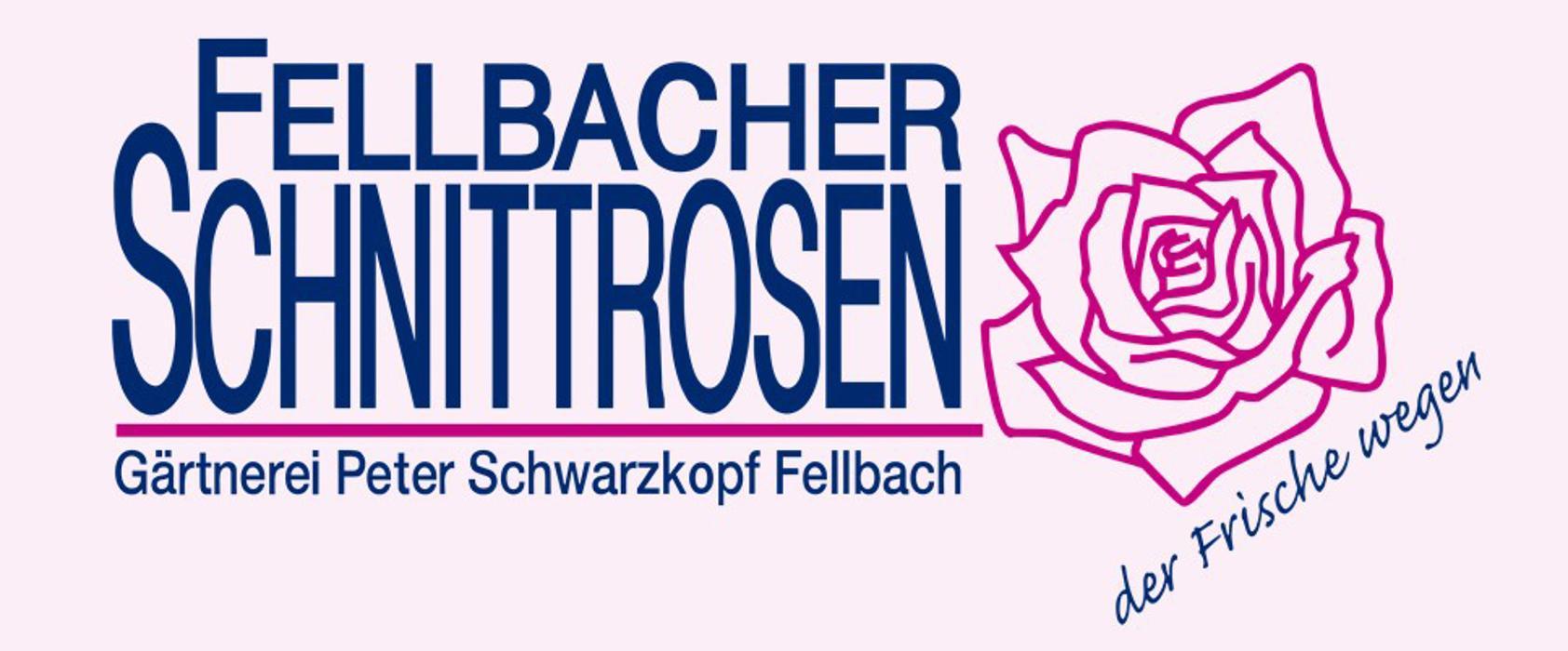 Fellbacher SchnittrosenGrtnerei Peter Schwarzkopf in