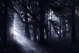 The Dark Forest 11