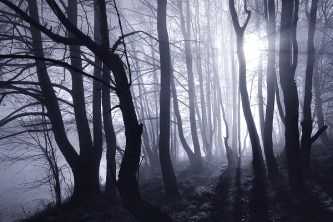 The Dark Forest 7