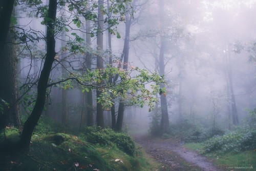 Mystical Fall Desktop Wallpaper 猫はすべてです Via Tumblr Image 1597133 By Lovely Jessy On