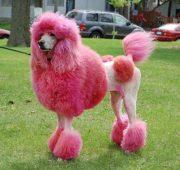 dye dog's fur