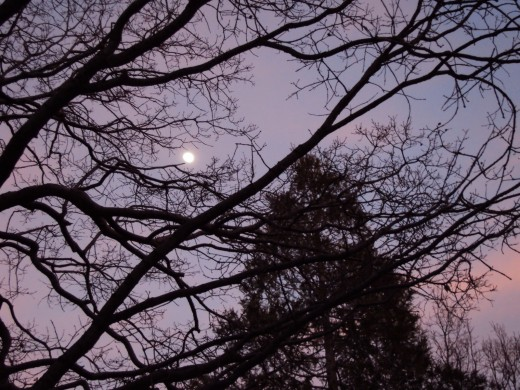 The light of the moon is streaming through the branches of the trees.