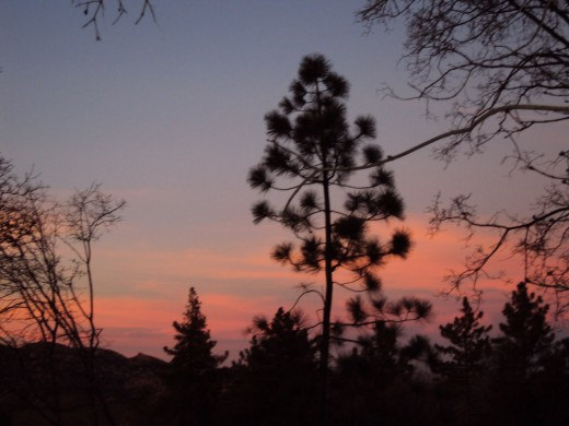 Focusing on a solitary pine tree with streaks of pink in the sun setting sky.